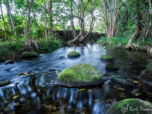 Toni creek