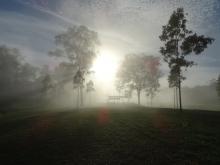 foggy morning gw